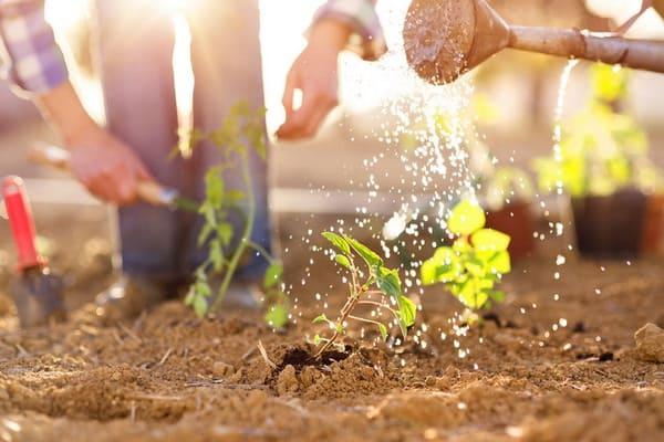 Innovative garden trends 2021
