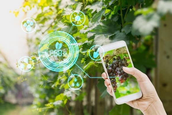 New Garden Trends 2021